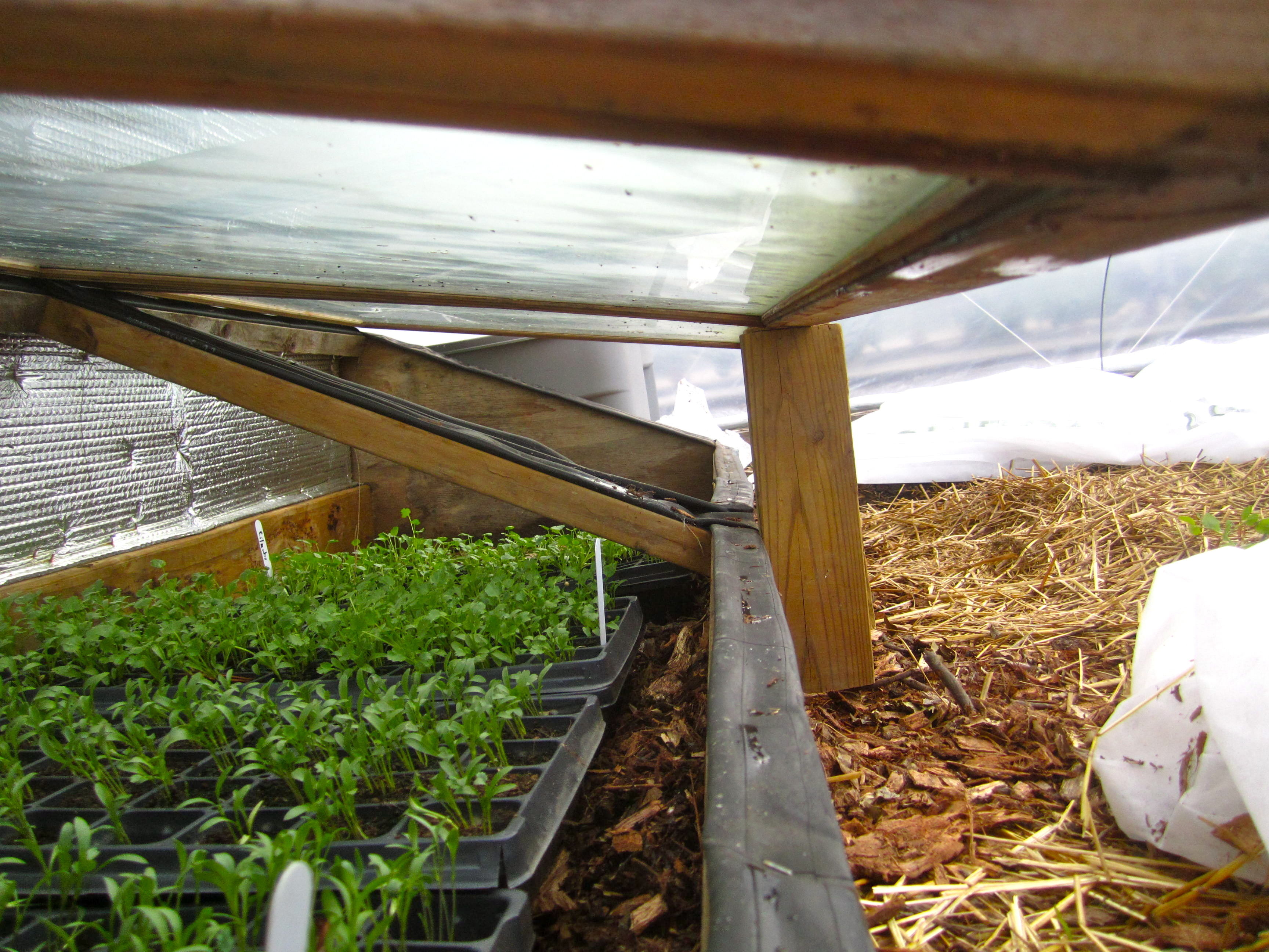 ECO City Farms – Guide to Winter Growing