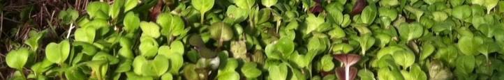 ECO's microgreens